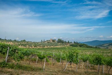 WINE ESTATE FOR SALE IN CHIANTI FIORENTINO, TUSCANY